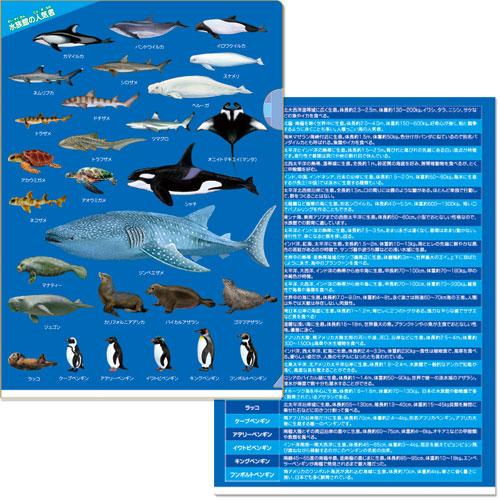 水族館の人気者 クリアファイル
