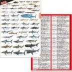 鮫大全クリアファイル
