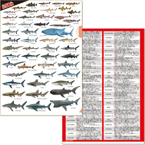 鮫大全 クリアファイル