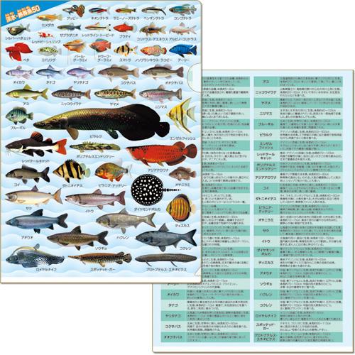 淡水・熱帯魚大全 クリアファイル