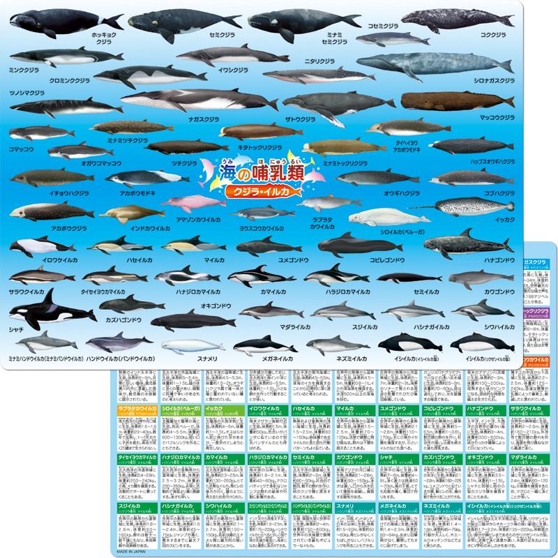 海の哺乳類クジラ・イルカ下敷き
