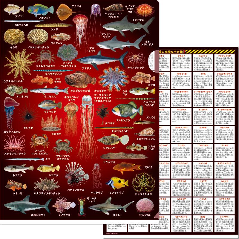 海の危険な生き物クリアファイル