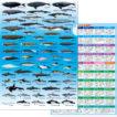 海の哺乳類クリアファイル