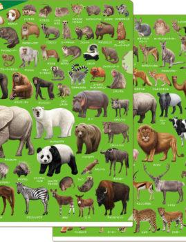 動物園の人気者 クリアファイル