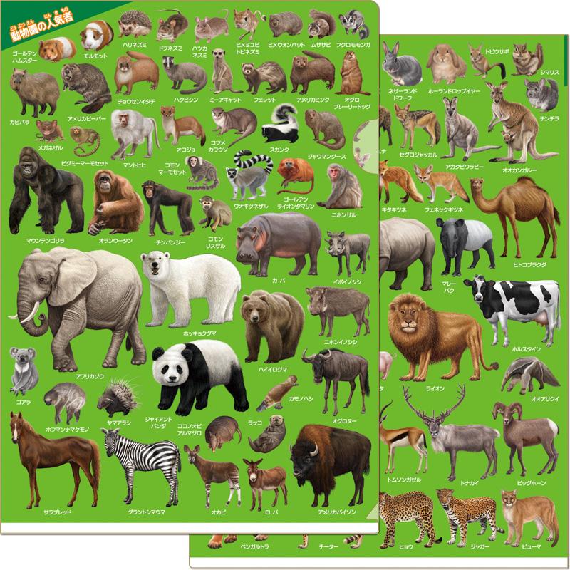 動物園の人気者クリアファイル