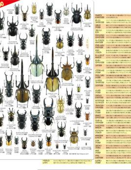 森の甲虫たち60 クリアファイル