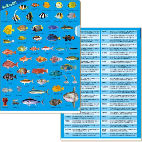 海の魚たち50 クリアファイル