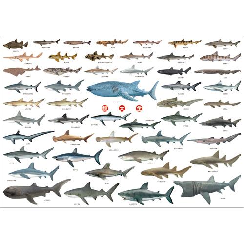 鮫大全 A1ポスター