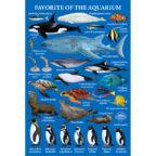 ポストカード:水族館の人気者