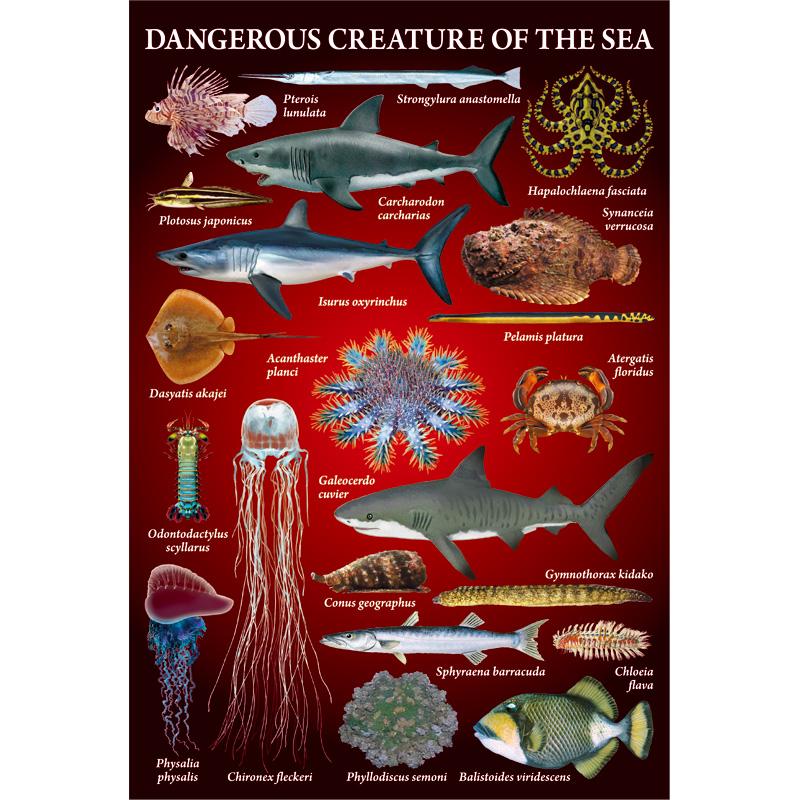 ポストカード:海の危険ないきもの