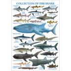 ポストカード:鮫