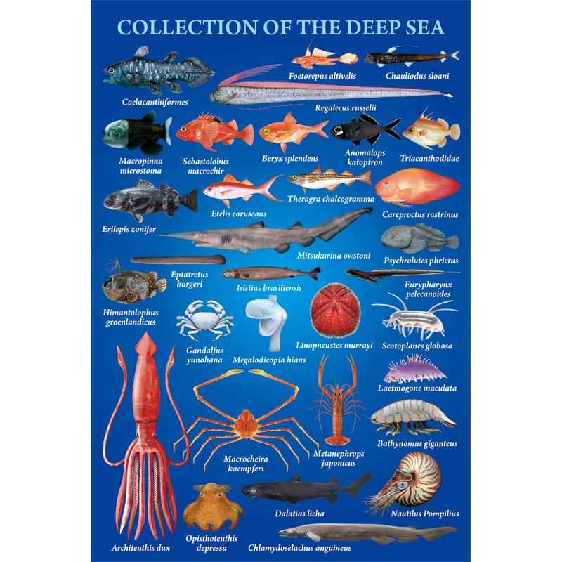 ポストカード:深海魚