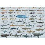 鮫大全A1ポスター