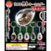 リアル標本キーホルダー昆虫・サソリ編(全6種)
