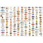 海魚大全A1ポスター