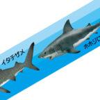 マスキングテープ:M003:鮫大全