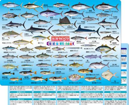 海産物大全 鮪・鰹・鰤・青魚・河豚編 下敷き