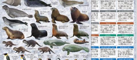 ペンギン・海獣大全 クリアファイル