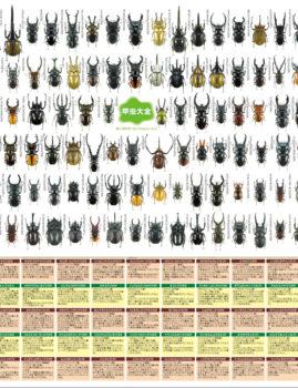 甲虫大全 下敷き