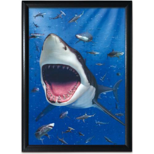 3Dアートミュージアム アクアリウム:ホホジロザメ