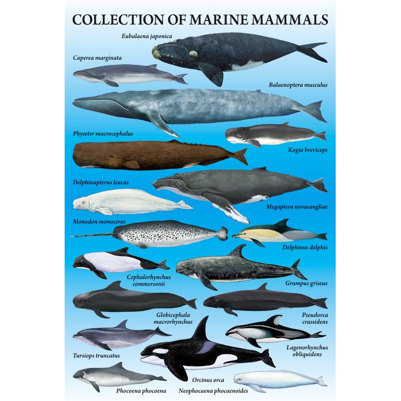ポストカード:海の哺乳類