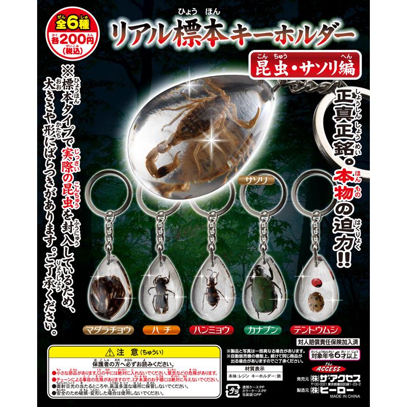 リアル標本キーホルダー 昆虫・サソリ編(全6種)